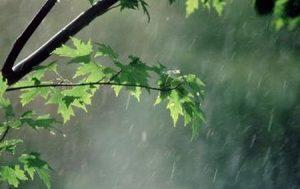 2915498 751 300x189 - بارندگی و کاهش دما در گیلان از امشب آغاز می شود